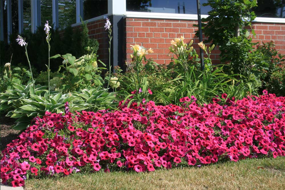 commercial-landscaping-16